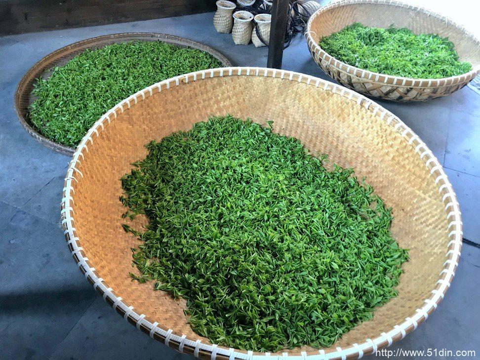 明福西湖龙井在永福寺的丰收。 照片:Cedric Tan