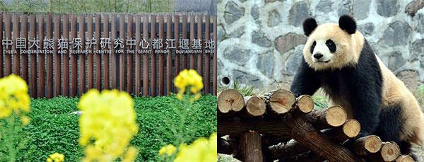 都江堰熊猫基地