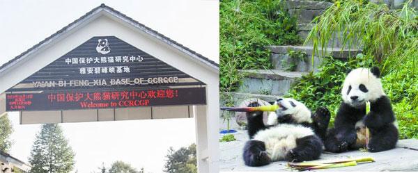 碧峰峡熊猫基地