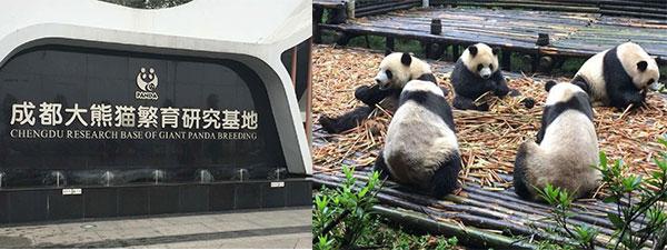 大熊猫成都研究基地